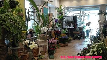 tienda_villa_flores_sansebastianshops